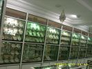 Mimosa Center Djerba Crafts